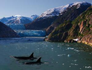 Killer_Whales_and_a_Glacier